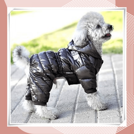 07 курсы шитья одежды для животных