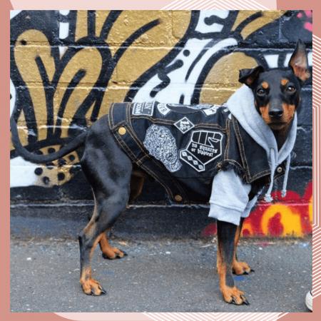09 пошив одежды для собак в москве