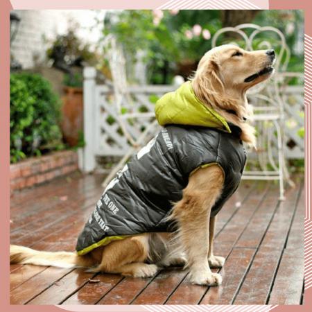 10 пошив одежды для собак