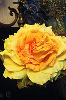 Цветы из фоамирана (мастер-класс)