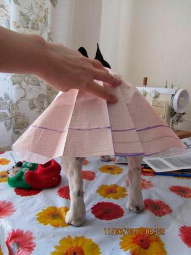 Как шить одежду для животных