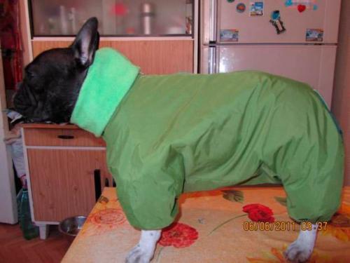 Курсы шитья одежды для собак в Москве