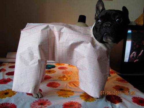 Курсы шитья одежды для животных