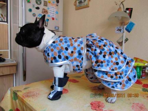 Мастер по пошиву одежды для животных