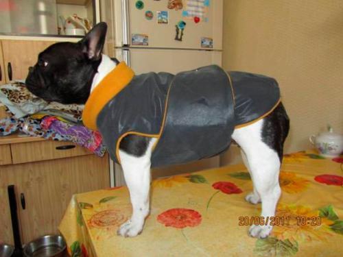 Научиться кроить одежду для собак