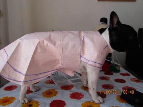 Одежда для животных пошив