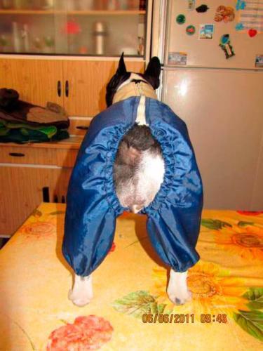 Одежда для животных - Шить легко!