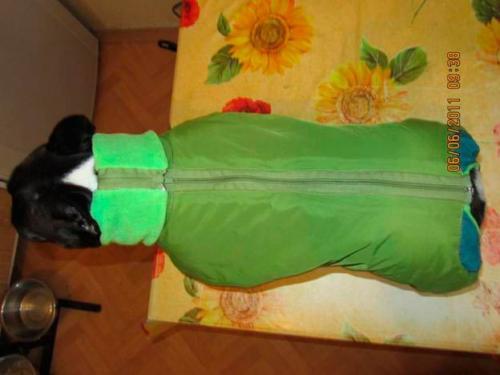 Пошив одежды для собак в Москве