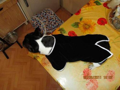 Сшить одежду для собаки